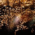 Photos: 川面に映る桜!