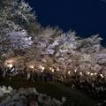 Photos: 一目千本桜 夜桜