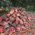 Photos: 植木鉢の山