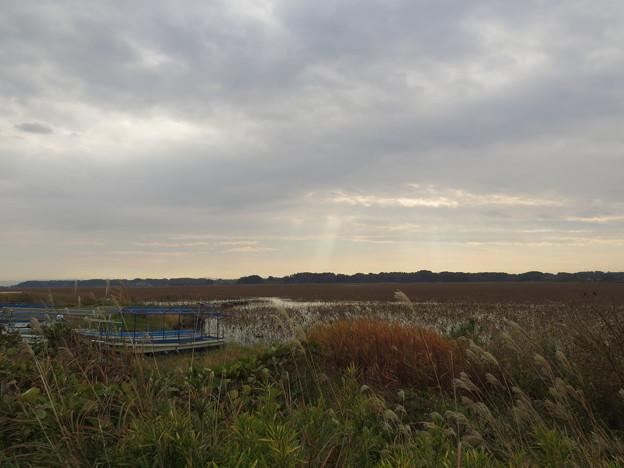 晩秋の伊豆沼
