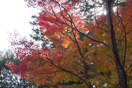大原野神社 - 09