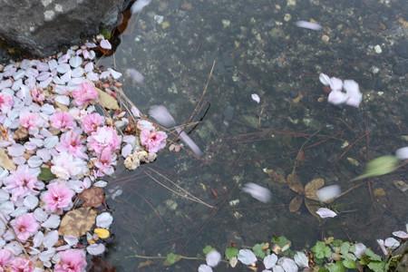 京都御苑 - 05
