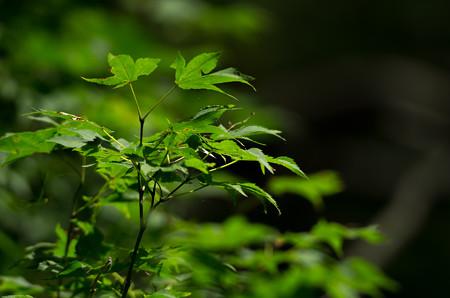 キョロロの森6