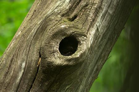 キョロロの森7