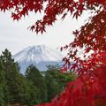 Photos: 秋色と富士山