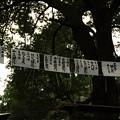 写真: DSC_ojidengaku0002