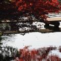 岡山後楽園 紅葉