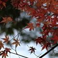 紅葉最終便