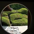 アートな庭