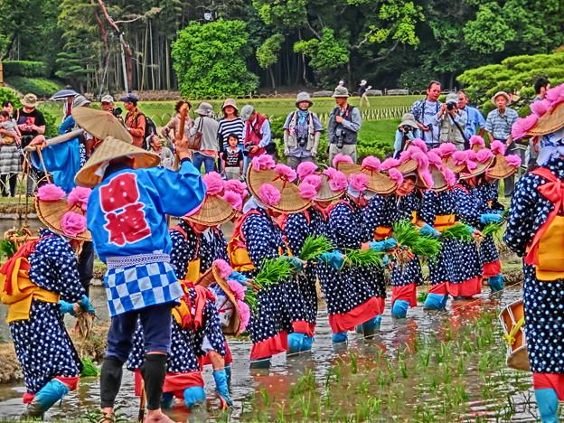 Photos: 田植え祭