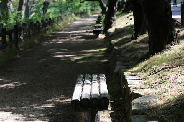 Photos: 初夏の散歩道