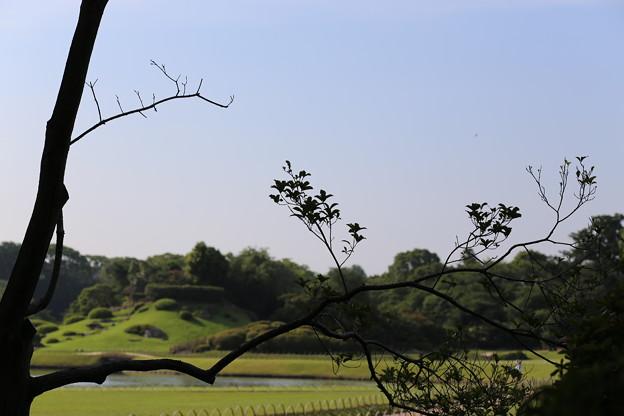 Photos: 夏空のお庭