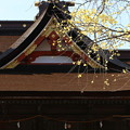 吉備津神社いちょう