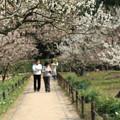 Photos: 御庭の花道