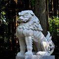熊野本宮大社鳥居前の狛犬阿形