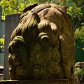 Photos: 大阪鵲森宮狛犬阿形