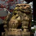 大阪鵲森宮狛犬吽形