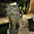 西吉野大日川向賀名生(むかいあのう)の春日神社阿形