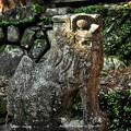 Photos: 西吉野大日川向賀名生(むかいあのう)の春日神社吽形
