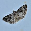 ヤマトニジュウシトリバ 20120728
