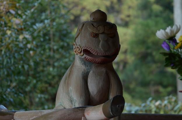 Photos: 野川弁財天の木彫り狛犬-阿形