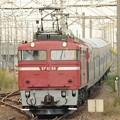黒磯訓練9502レ EF81 98+24系6連 小金井駅通過