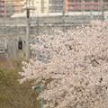 春の宇都宮線と東北新幹線