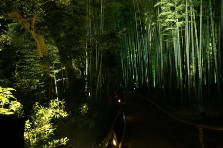 高台寺夜間特別参拝1