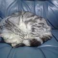 Photos: 【今日のにゃんこ】爆睡中のおばあちゃん猫。近づくと『くぉ~~ぷ~...