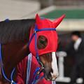 Photos: Kinsho Otohime