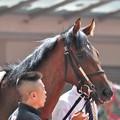 Photos: Oriental Poppy 01