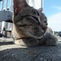 写真: ネコ君
