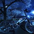 Photos: 夜桜に咲く