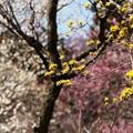130316_青梅市梅の公園 (164)