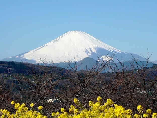 130129_富士山(吾妻山) (3)