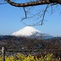130129_富士山(吾妻山) (36)