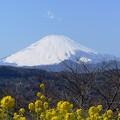rs-140311_菜の花と富士山