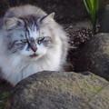 Photos: 庭石と猫