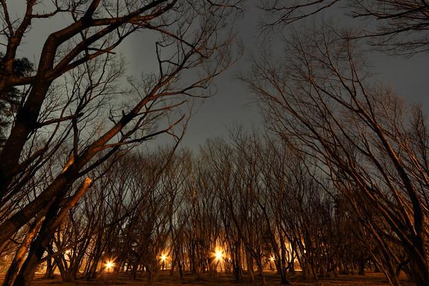 樹林公園の夜景1