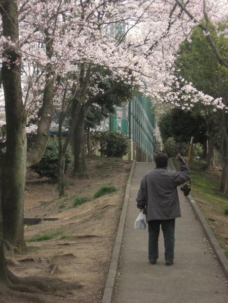 メモリーにいつも桜を