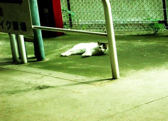 脱ぎたい猫のかぶり物