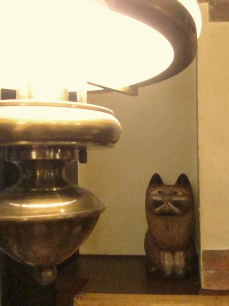 電灯に見惚れる猫