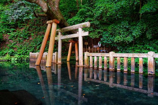 Photos: 鹿島神宮 御手洗池