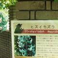 Photos: ヒスイカズラ4-6