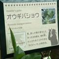 Photos: オウギバショウ説明5-4