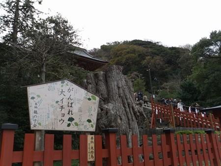 鶴岡八幡宮・大イチョウ0-3