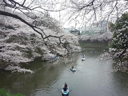 千鳥ケ淵桜7