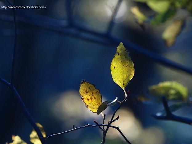 木漏れ日葉っぱ♪