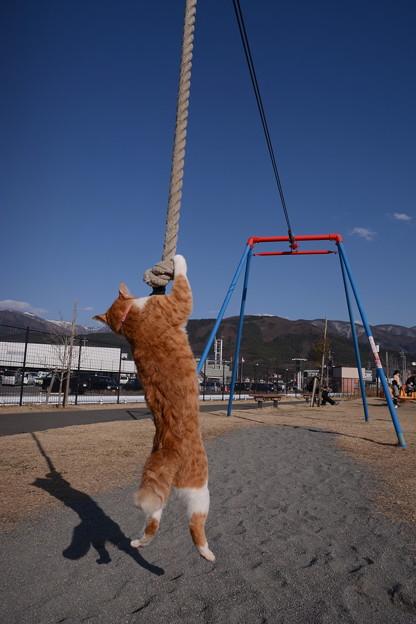 Photos: ターザンロープに挑戦