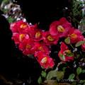 Photos: flower-9094
